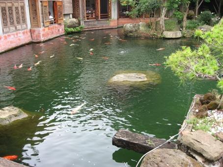 中午用餐餐廳池塘.JPG
