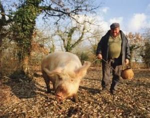 farmer_pig-300x237