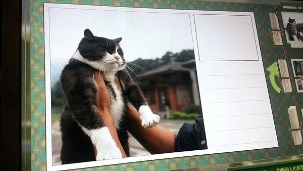 1015看貓.jpeg