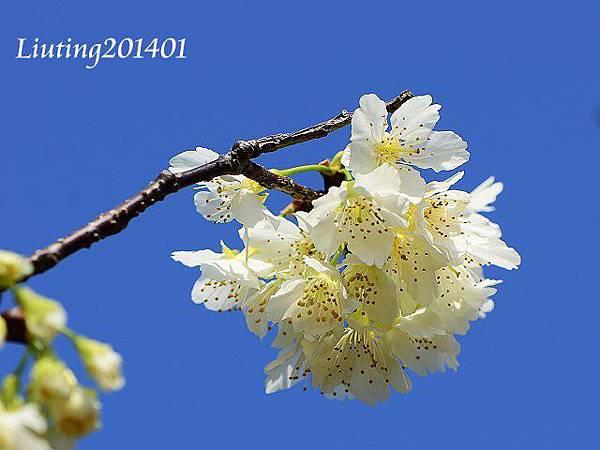 DSC_7111-1.JPG