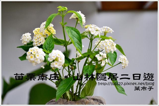 DSC_1337
