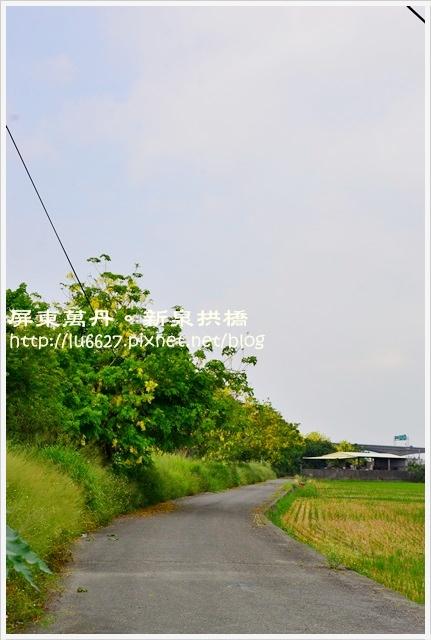 DSC_0284