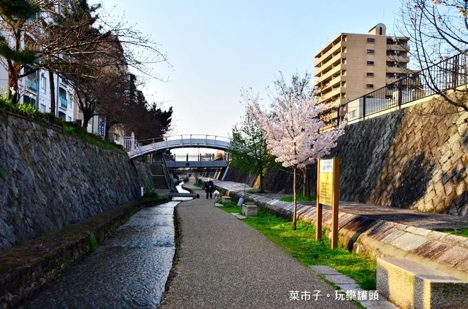DSC_8377.JPG
