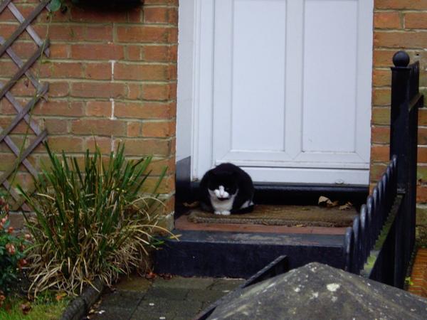 附近社區看到的胖貓