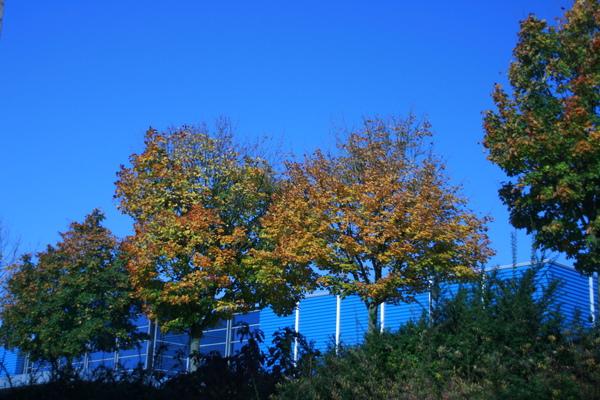 楓葉都慢慢轉紅了