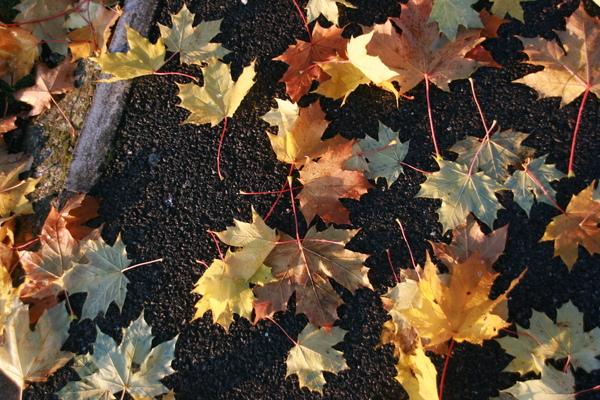 地上的葉子也很棒