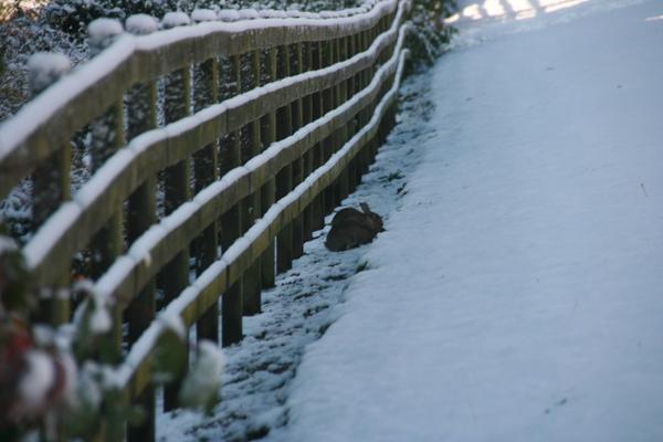 下雪兔子還是出來玩喔