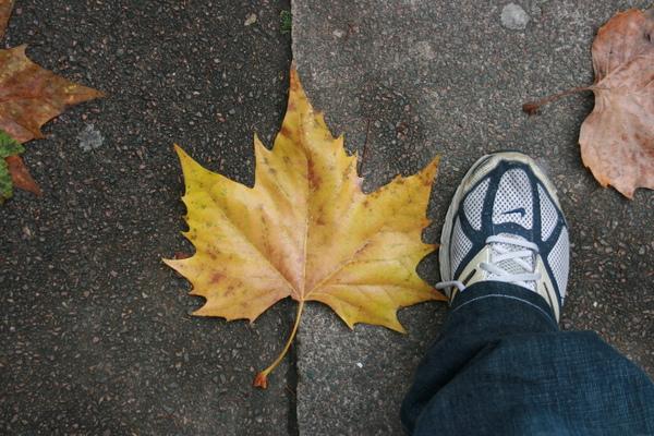 楓葉Vs.腳