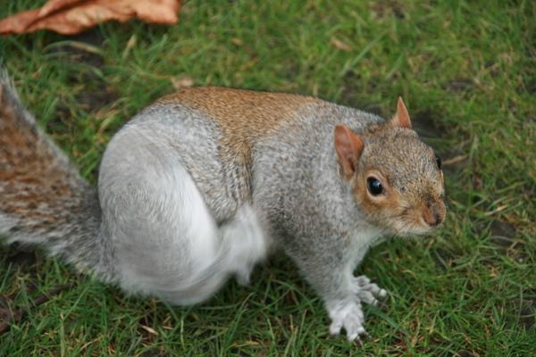 可愛的小松鼠