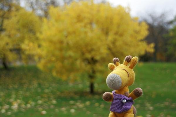 鹿鹿看到特別的樹