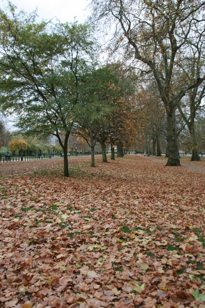 秋天的公園