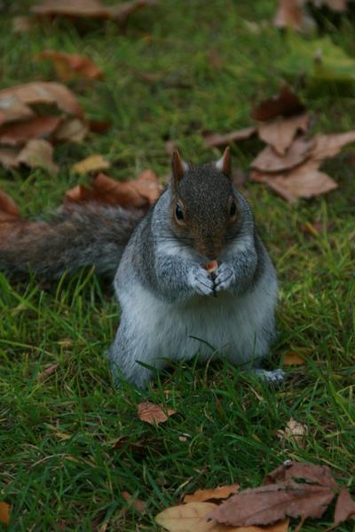 松鼠在吃堅果