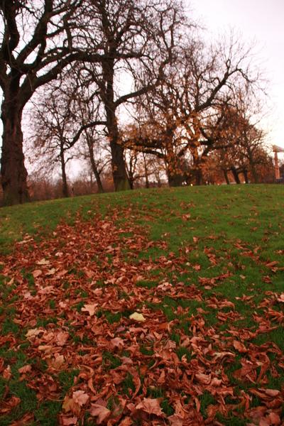 落葉很漂亮