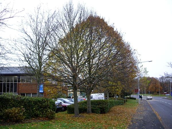 之前葉子很漂亮的樹全禿