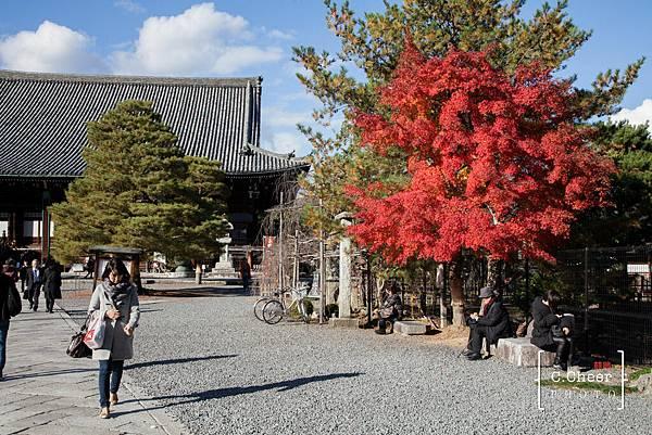 嵐山-3118.jpg