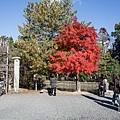 嵐山-3119.jpg