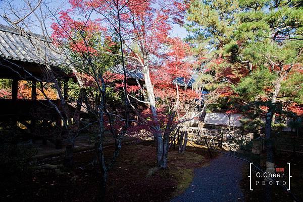 嵐山-3129.jpg