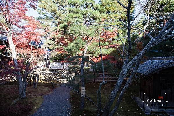 嵐山-3130.jpg