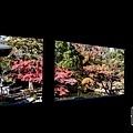 嵐山-3142.jpg