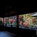 嵐山-3147.jpg