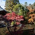 嵐山-3149.jpg