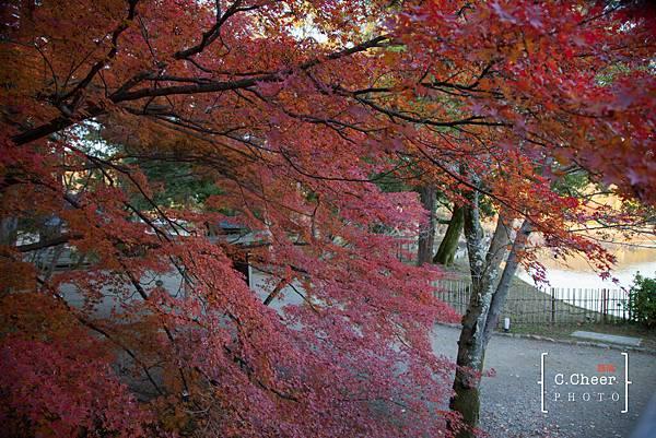 嵐山-3223.jpg