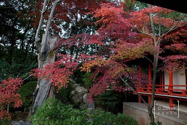 嵐山-3241.jpg