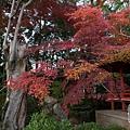 嵐山-3242.jpg