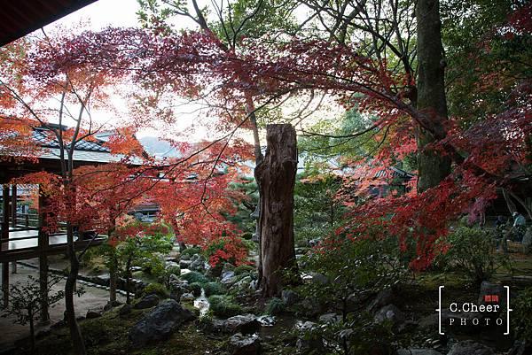 嵐山-3258.jpg
