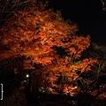 清水寺夜楓-2955.jpg