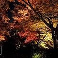 清水寺夜楓-2959.jpg