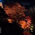 清水寺夜楓-2961.jpg