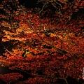 清水寺夜楓-2968.jpg