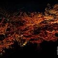 清水寺夜楓-2969.jpg