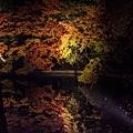清水寺夜楓-2979.jpg