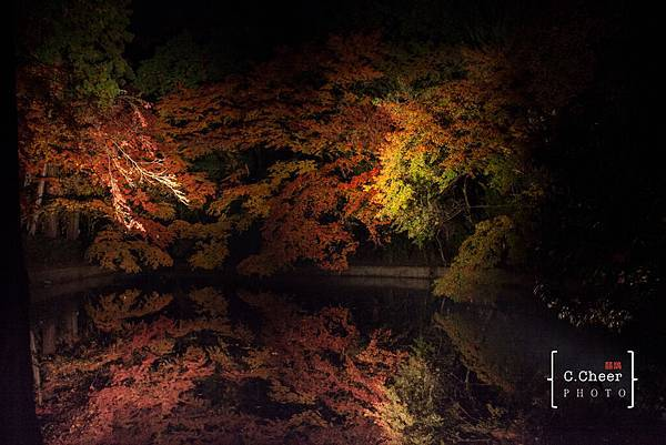 清水寺夜楓-2980.jpg