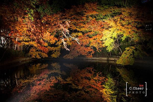 清水寺夜楓-2988.jpg