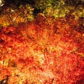 清水寺夜楓-2993.jpg