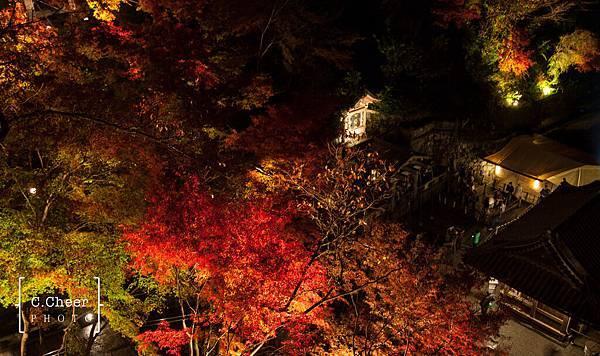 清水寺夜楓-3008.jpg