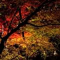 清水寺夜楓-3012.jpg