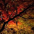 清水寺夜楓-3013.jpg