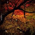 清水寺夜楓-3015.jpg
