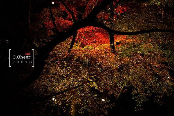 清水寺夜楓-3016.jpg
