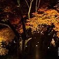 清水寺夜楓-3017.jpg