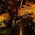 清水寺夜楓-3018.jpg