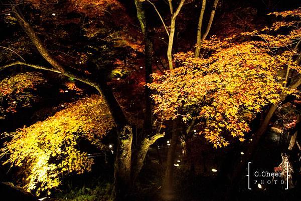清水寺夜楓-3019.jpg
