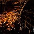 清水寺夜楓-3020.jpg