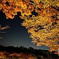 清水寺夜楓-3029.jpg