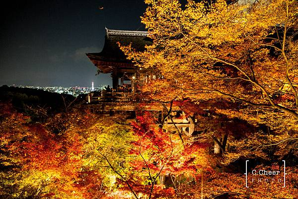 清水寺夜楓-3039.jpg