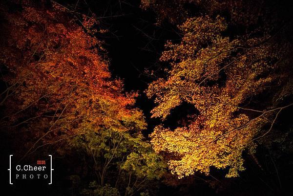 清水寺夜楓-3078.jpg